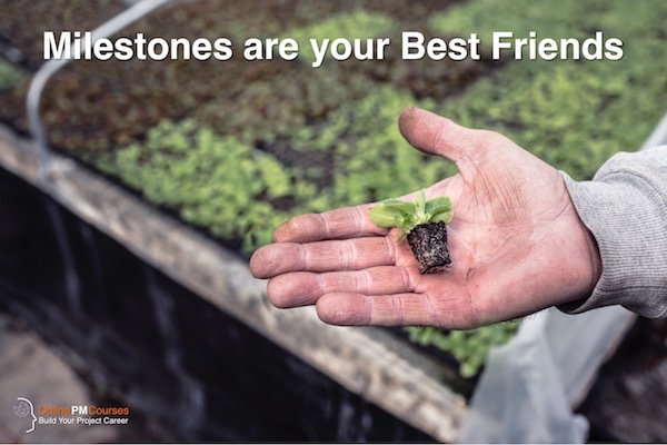 Milestones are your Best Friends